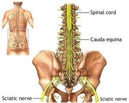 Exercise for Sciatica Nerve Pain Relief | Store4You Singapore | Scoop.it