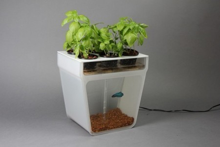 Survival Gardening - Aquaponics - Straight Forward Prepper | geography | Scoop.it
