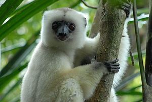 WILDLIFE UPDATE : Primates in peril – conservationists reveal the ... | Global Issues | Scoop.it