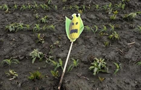 «Nourris aux OGM»: l'étiquetage doit être obligatoire, réclame un collectif | Territoires en transition, ESS et circuits courts | Scoop.it