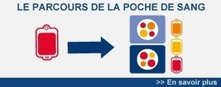 Etablissement Français du Sang | Projets SVT 3èmes Thème 3 : Les transfusions, greffes et transplantations | Scoop.it