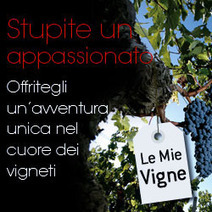Idea regalo vino originale, meglio di uno corso in enologia? Donate delle vigne in regalo! | Adotta un vigneto! | Scoop.it