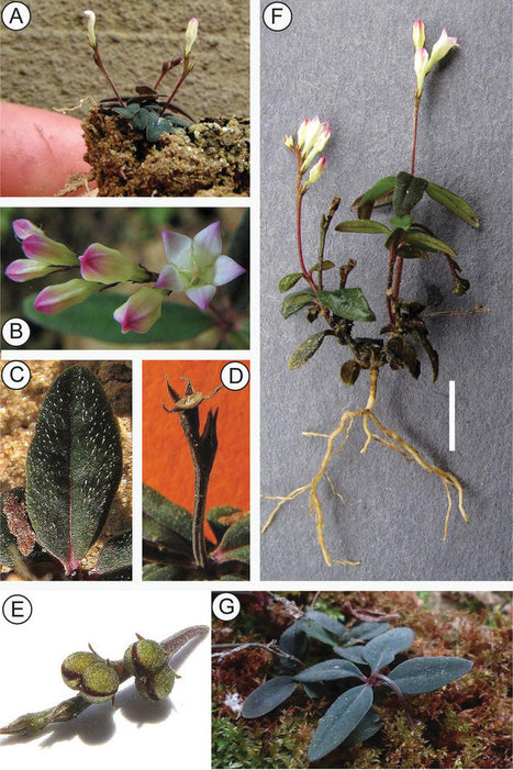 A Recently Discovered Species From Brazil Plants Its Own Seeds | Erba Volant - Applied Plant Science | Scoop.it