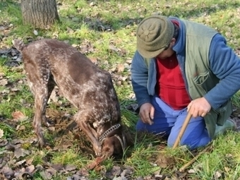 "Truffle Hunting & Autumn Flavours ""Le Marche"" Region ITAL 