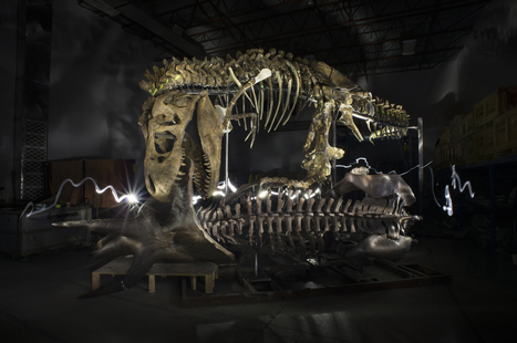 'Nation's T. rex' stands upright for the first time in 65 million years — and he's scary | Merveilles - Marvels | Scoop.it