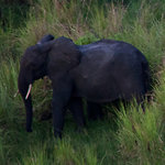 Africa's Elephants Are Being Slaughtered in Poaching Frenzy | Earth's Biomes: Maintaining a Balance | Scoop.it