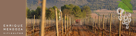 Bodegas Mendoza | Came4Wine - Your Wine Travel Guide | Wine Travel | Scoop.it