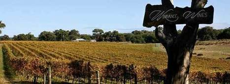 What Do Americans Really Think Of Aussie Wines? | Wine News & Features | Grande Passione | Scoop.it