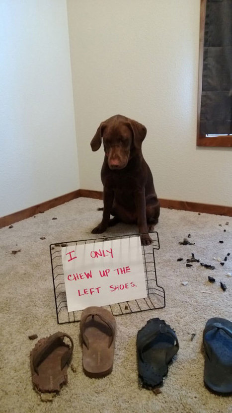 30 Naughtiest Dogs: You'll Crack Up When You Find Out What They Did | All Things Dog | Scoop.it