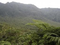 La lumière, source de diversités des niches écologiques des forêts ...   Bee'O Press   Scoop.it