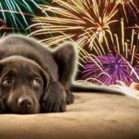 Le 10 regole della Lav per rassicurare gli animali a Capodanno - Ecologia.Guidone.it | Green | Scoop.it