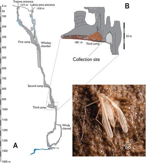 Record de profondeur souterraine pour des insectes volants avec cette nouvelle espèce de Croatie / The World's Deepest Flying Insect Lives in Complete Darkness with No Food or Sex | EntomoNews | Scoop.it
