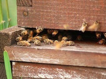Insecticide Regulators Turning Blind Eye to Bee Deaths, Says Parliament | Vertical Farm - Food Factory | Scoop.it