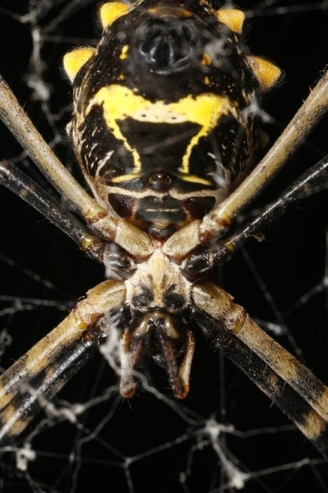 Amazon Spiders, Up Close. | Rainforest EXPLORER:  News & Notes | Scoop.it
