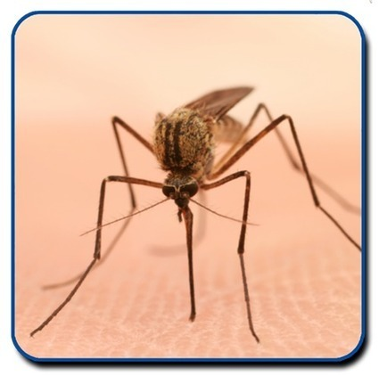 Mosquitoes, And How You Can Prevent Becoming Lunch | Tucson Weekly | CALS in the News | Scoop.it