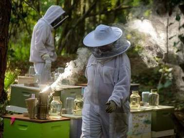 Saving Florida bee colonies, growing an industry | Sustain Our Earth | Scoop.it