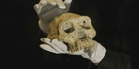 La découverte d'un crâne vieux de 1,8 million d'année remet toute notre histoire en question - Sciences - MYTF1News | Veille technologique | Scoop.it