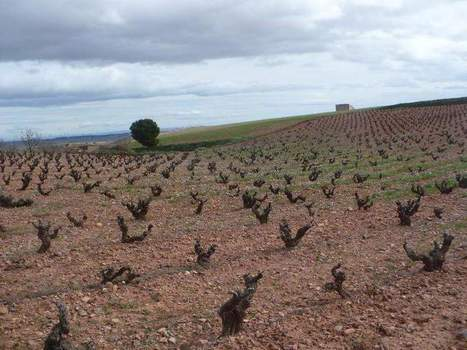 Wine in mind: The jewel of Aragon | Vitabella Wine Daily Gossip | Scoop.it