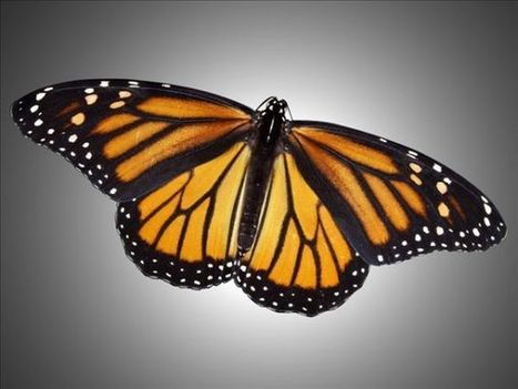 IDNR asks for help to conserve monarch butterfly - KFVS | Students Preserving the Environment | Scoop.it