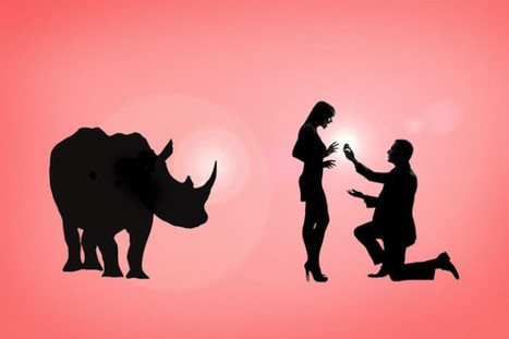 How the engagement ring proves that we shouldn't trade rhino horn - Africa Geographic Magazine Blog | safarious | Scoop.it