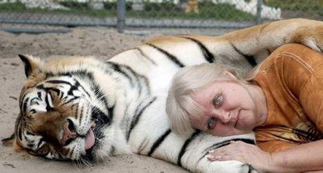 Vivre avec les tigres - Europe Presse | France | Scoop.it