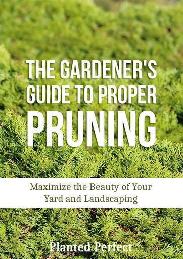 Family Gardening - Community - Google+ | dianagrant@gloriousconfusion.com | Scoop.it