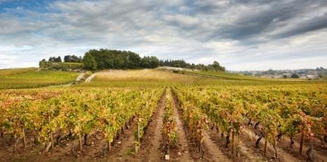 Château de Chamirey : Mercurey, des vins qui prennent de l'altitude - Le Nouvel Observateur | Le Vin en Grand - Vivez en Grand ! www.vinengrand.com | Scoop.it