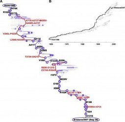 A WORD on the constraints of influenza virus evolution | Influenza | Scoop.it