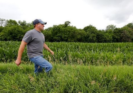 Farmers turn to GMO-free crops to boost income | sustainablity | Scoop.it