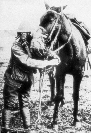 The Horses of World War I - Today I Found Out | First World War History | Scoop.it