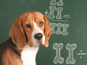 Old dogs no longer funded for trick-based education   NewsBiscuit   enjoy yourself   Scoop.it