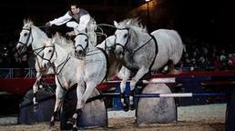 Rome's carnival of horses   HorsesOne   Scoop.it