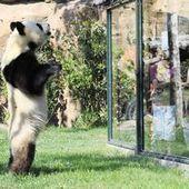 Beauval : 4 600 animaux, dont 2 pandas | Stations de ski, parcs de loisirs, bons plans | Scoop.it