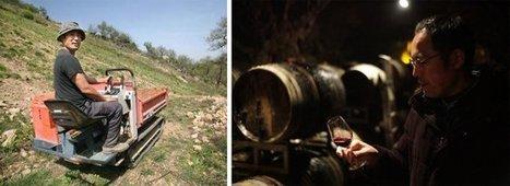 Hirotake Ooka - faire du vin juste avec les raisins | Le Vin et + encore | Scoop.it
