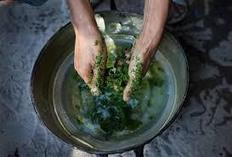 The thing you need to understand about how exactly to obtain bali kratom | buykratom.us | Scoop.it