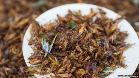 Bugs Are the New Food | Entomophagy: Edible Insects and the Future of Food | Scoop.it