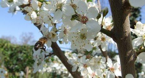Des insectes aux mammifères, toute la biodiversité est concernée par le réchauffement, même si beaucoup d'incertitudes subsistent | décroissance | Scoop.it