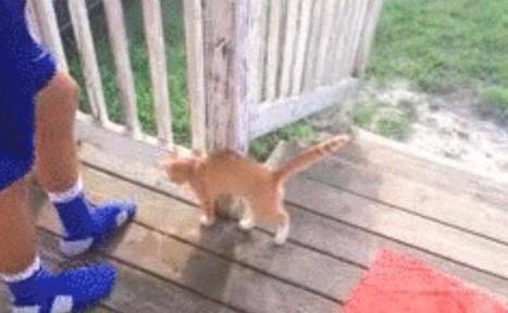 Internet s'émeut d'une vidéo montrant un homme donnant un coup de pied à un chaton | Les chats c'est pas que des connards | Scoop.it