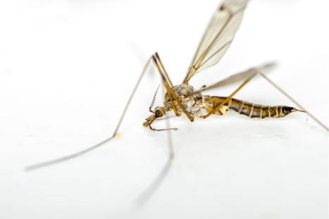U.K. Braces for a Massive Explosion of Flies | Biodiversity protection | Scoop.it