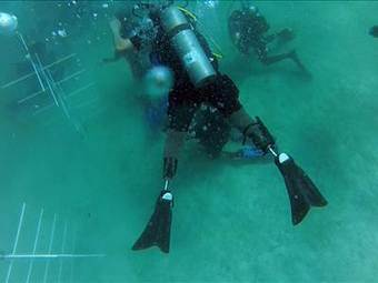 Wounded vets' new mission: transplanting coral | All about water, the oceans, environmental issues | Scoop.it