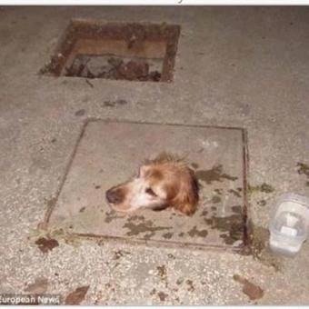 Ce petit chien est passé à deux doigts d'une triste mort | CaniCatNews-actualité | Scoop.it