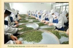 Buying green tea on wholesale from online tea stores can open all boundaries | Black Tea | Scoop.it