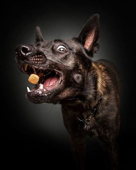 Dogs try to catch their treats – German photographer Christian Vieler captures the moments. | Dog Pictures - Pindoggy | Scoop.it