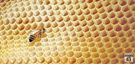 Haute-Loire : un nouveau dispositif de surveillance des ruchers - mon43 | apiculture 2.0 | Scoop.it