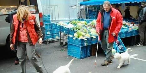 Chien guide: l'ami qui vous veut du bien - dh.be   Chiens et chats - comportement, santé et diététique   Scoop.it