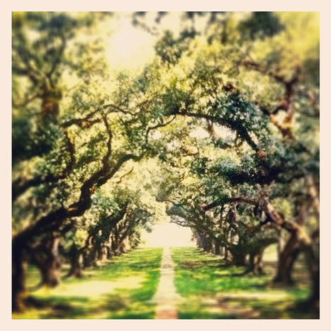 Oak Alley Plantation back in 2003 | Oak Alley Plantation: Things to see! | Scoop.it