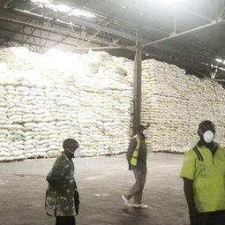 Polémique autour de 7000 tonnes de riz toxique bloquées au port de Douala (Cameroun) | Toxique, soyons vigilant ! | Scoop.it