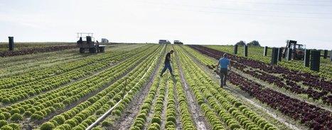 Genève bannit les OGM de sonagriculture | Questions de développement ... | Scoop.it