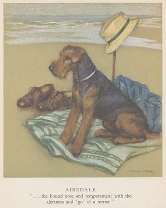 I Want an Airedale | Airedale Terriers | Scoop.it