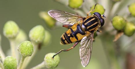 Halte au massacre des abeilles contre les pesticides néonicotinoïdes | Economie Responsable et Consommation Collaborative | Scoop.it